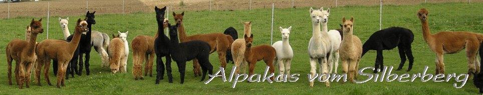 Alpaka chov v Německu Lengefeld alpaky chovu, alpaka chov hřebců, klisen, alpaka, alpaka hříbata, alpaka vlna, alpaka prodej