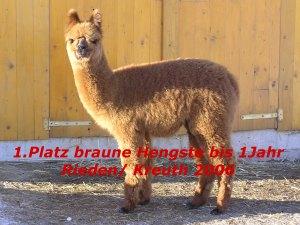 Crispin - Alpakas 1.Platz braune Hengste bis 1Jahr, 2006 Kreuth